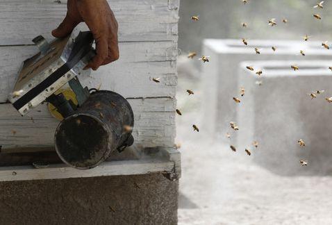 las-abejas-en-mexico-en-peligro-por-los-neonicotinoides-2